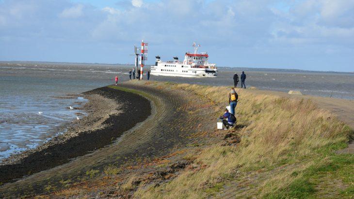 Beach Clean in Lauwersoog